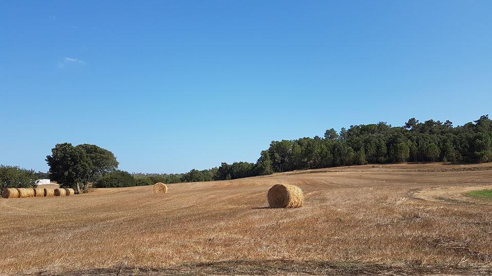 Som Rurals - SR-187 | Gironès