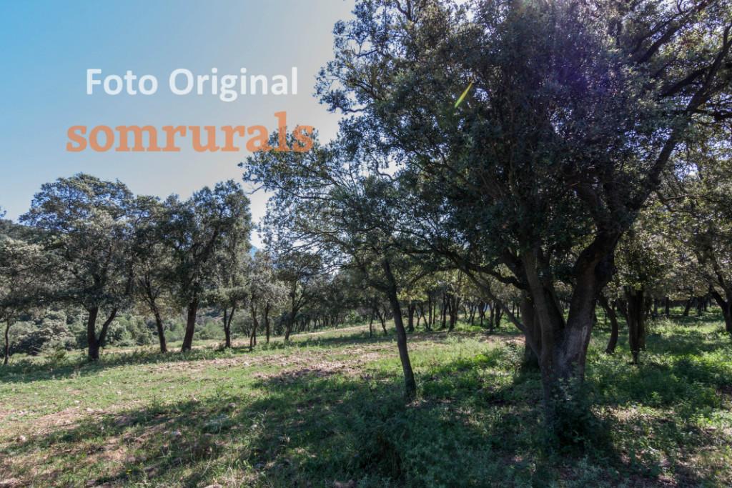 Som Rurals - SR-389 | Solsonès