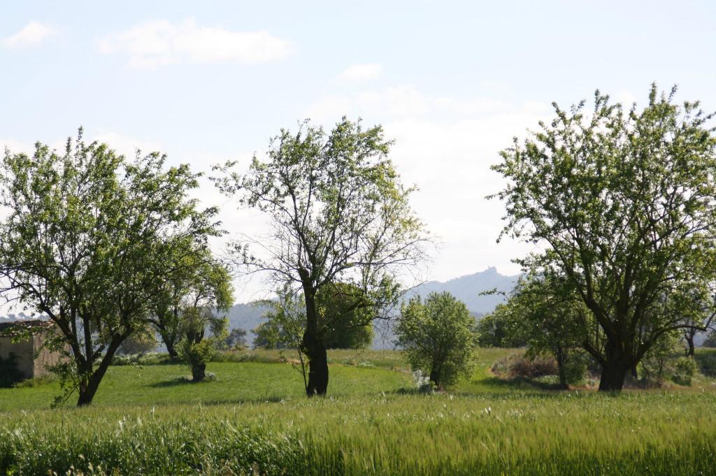 Som Rurals - SR - 505 | Conca de Barberà