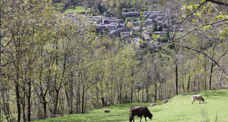 Som Rurals - SR-599 | Ripollès