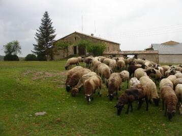 Som Rurals - SR-627 | Solsonès